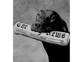 Brinquedo de Pelúcia Jornal The Dog News