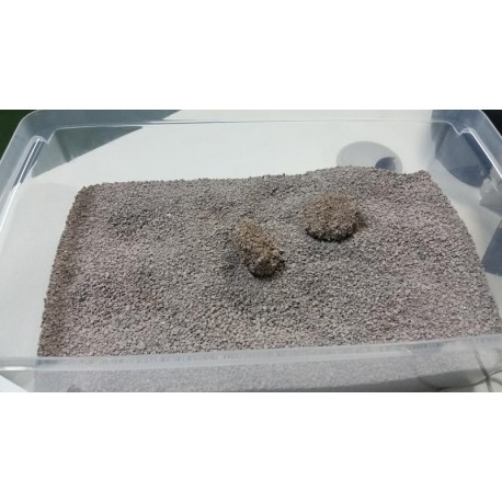 Areia Sanitária Bentonite Premium para Gatos 5kg