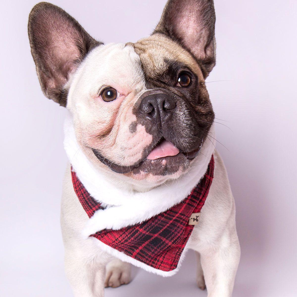 Bandana para cachorro Bo.be Poncho Xadrez Vermelho