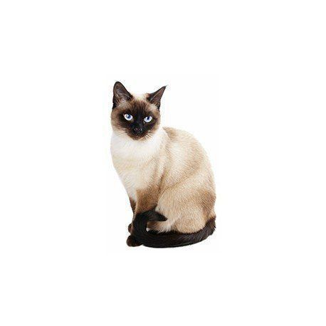 Bolsa Clutch Gato Siamês