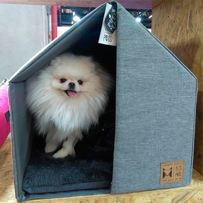 Casinha para Cachorro The House Blue Beds for Pets