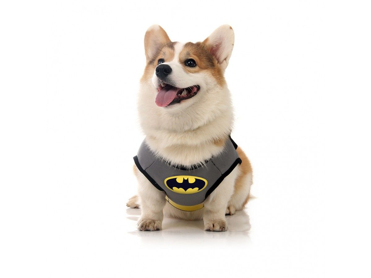 Fantasia para Cachorro Batman™ Licenciado