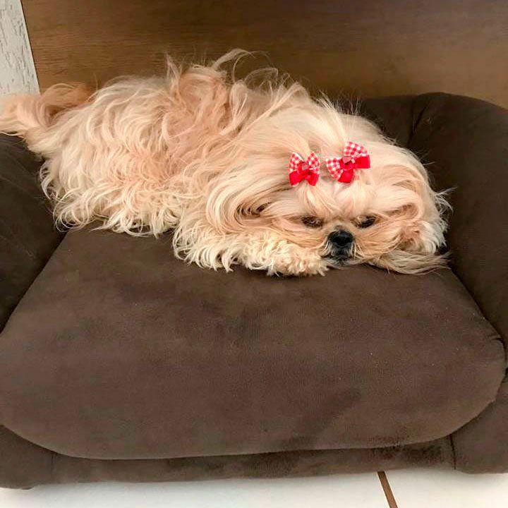Sofá para Cachorro Lunna Pet Clássico Cinza