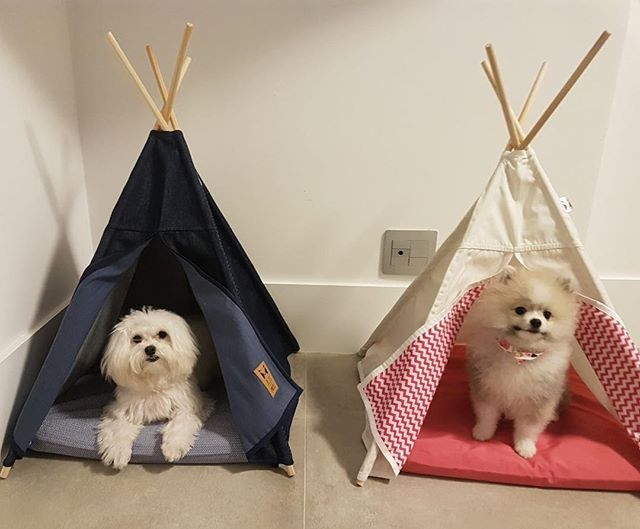 Tenda para Cachorro Beds for Pets Pink