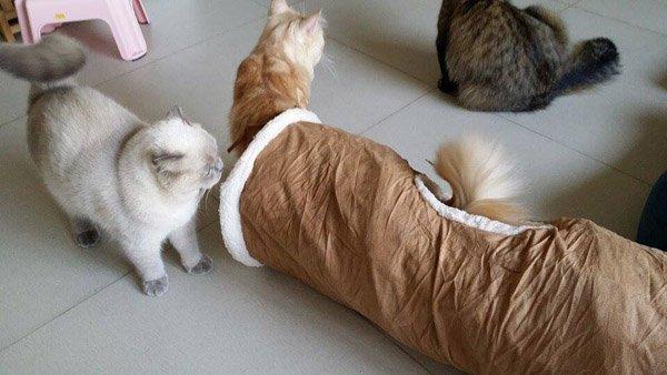 Toca Túnel Brinquedo Find Me Cat AFP