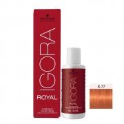 Kit Igora Royal HD 8-77 e Oxigenada 20vol 6%