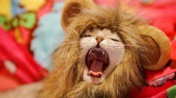Fantasia Cachorros E Gatos Pet Juba De Leão - Promoção!