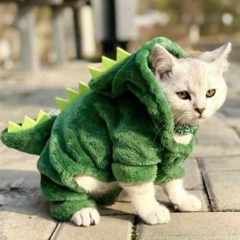 Roupa Fantasia Pet Gato Dinossauro Completa Pronta Entrega