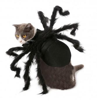 Fantasia De Aranha De Halloween pet - Cão Chique Confortável