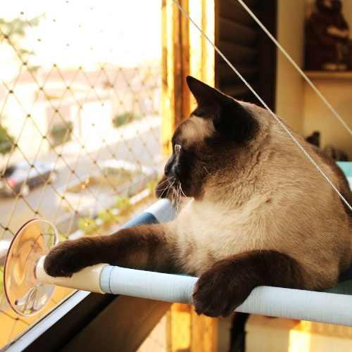 Cama De Gatos Para Janela Suspensa Catbed De Parede