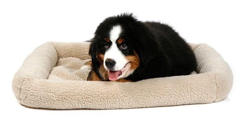 Caminha Suiça Para Cachorros Cães Luxo Pelucia Bege Tamanho M