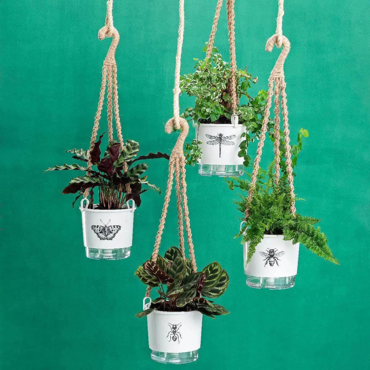 04 Vasos Autoirrigáveis Jardim de insetos pendente em alça macramê  - Vasos Raiz Loja Oficial