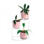 Conjunto Mini Plant Gang