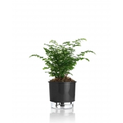 Vaso Autoirrigável Médio 16cm x 15cm N03