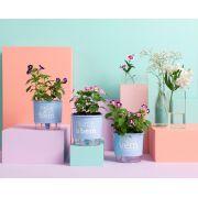 Conjunto 3 Vasos Autoirrigáveis Pequenos 12cm x 11cm Plante o Bem Azul Serenity
