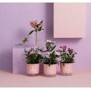 Conjunto 3 Vasos Autoirrigáveis Pequenos 12cm x 11cm O Amor é o Tempero da Vida Rosa Quartz