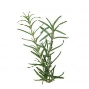 Sementes para plantar Alecrim em vasos autoirrigáveis RAIZ