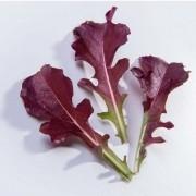 Sementes para plantar Alface Mimosa Roxa Baby Leaf em vasos autoirrigáveis RAIZ