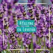 Sementes para plantar Alfazema ou Lavanda em vasos autoirrigáveis RAIZ