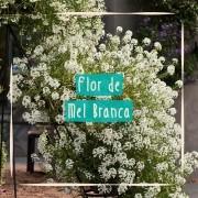 Sementes para plantar Alyssum Branco ou Flor de Mel em vasos autoirrigáveis RAIZ