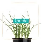 Sementes para plantar Cebolinha em vasos autoirrigáveis RAIZ