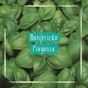 Sementes para plantar Manjericão Basílico Folha Larga em vasos autoirrigáveis RAIZ