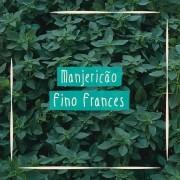 Sementes para plantar Manjericão Fino Francês em vasos autoirrigáveis RAIZ