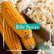 Sementes para plantar Milho Pipoca em vasos autoirrigáveis RAIZ