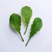 Sementes para plantar Mostarda Lisa Baby Leaf em vasos autoirrigáveis RAIZ