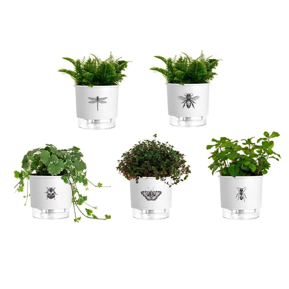 Coleção completa vasos autoirrigáveis Jardim de Insetos N02  - Vasos Raiz Loja Oficial