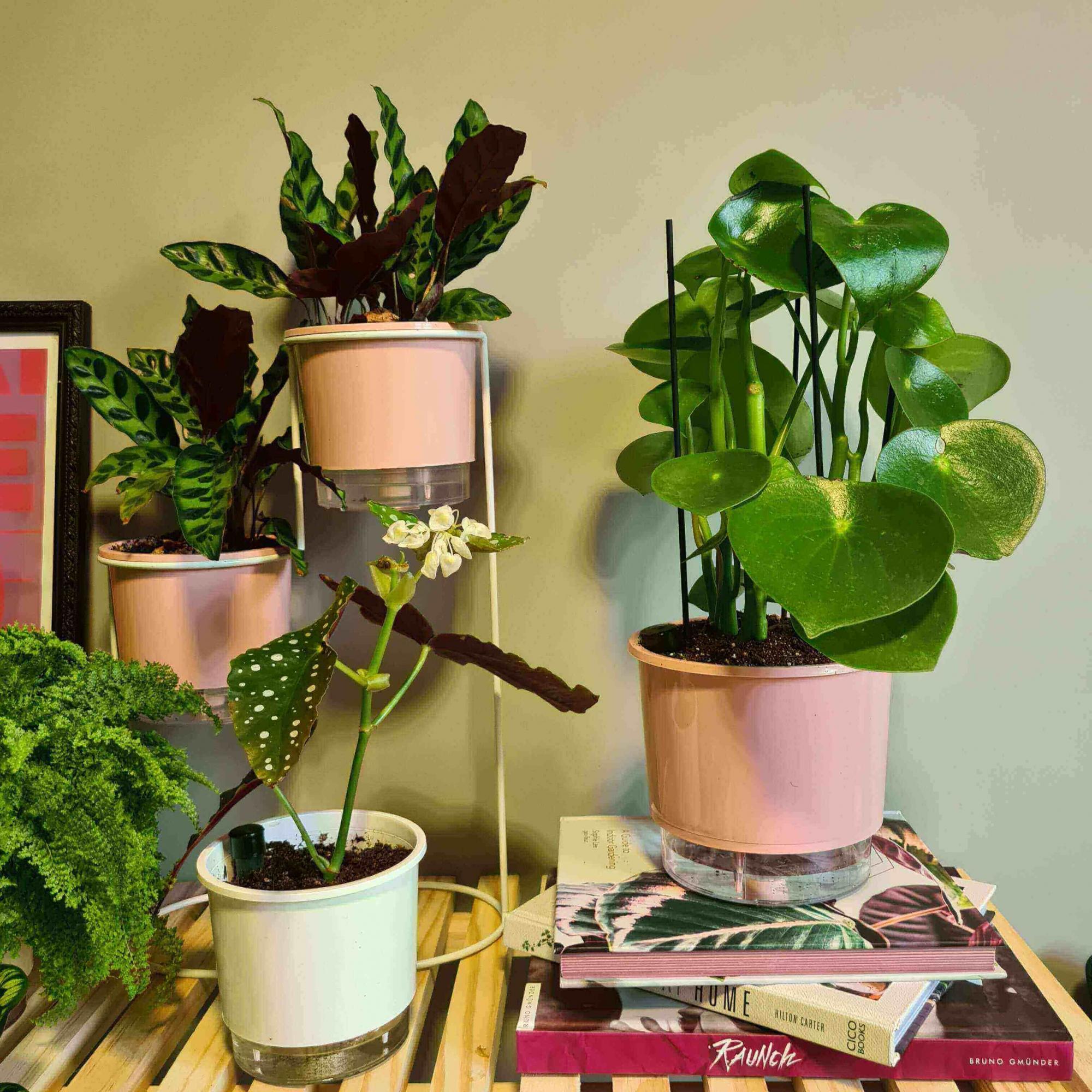 Conjunto plant gang nas quartas usamos rosa  - Loja Raiz