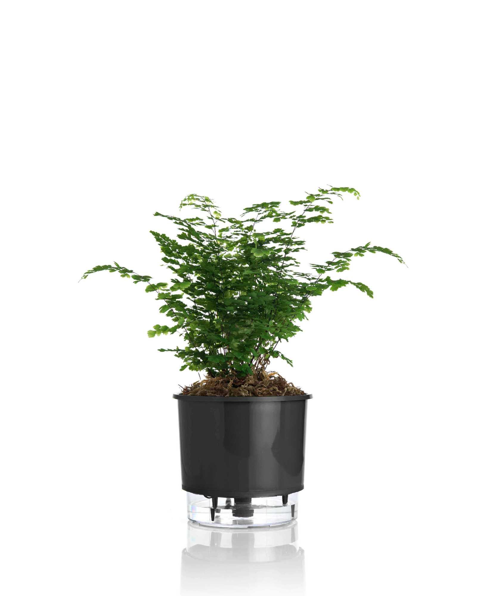 Vaso Autoirrigável Médio 16cm x 15cm N03  - Loja Raiz