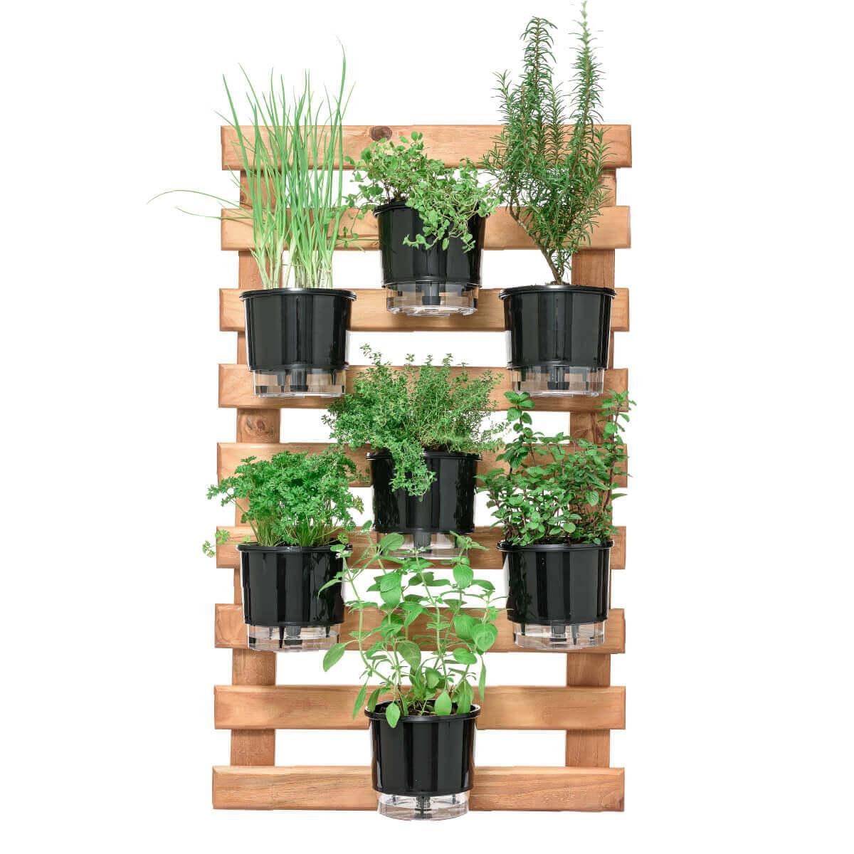 Horta Vertical Caramelo 60cm x 100cm, 7 Vasos e Suporte Preto  - Loja Raiz