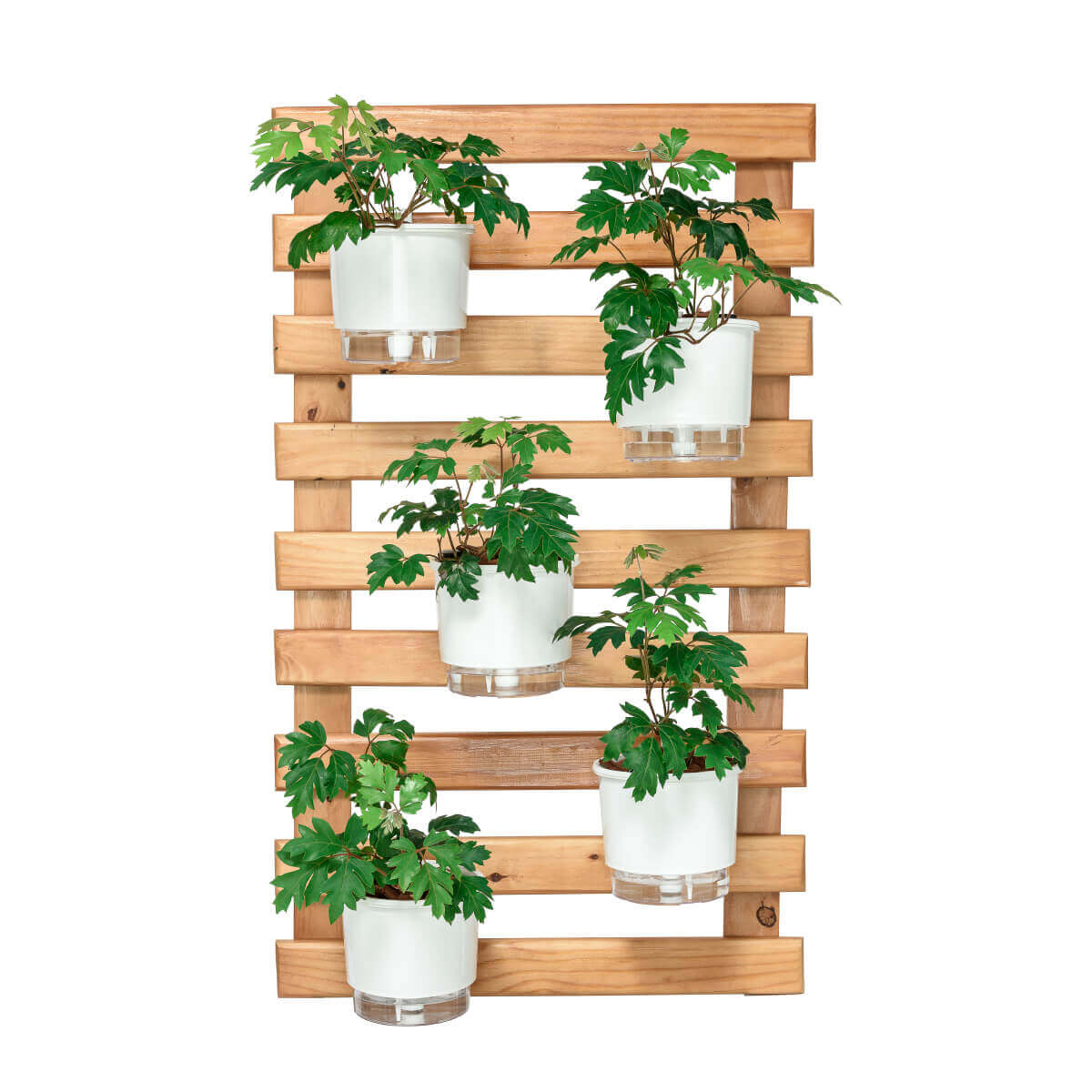 Horta Vertical Caramelo 60cm x 100cm, 5 Vasos e Suporte Preto  - Loja Raiz