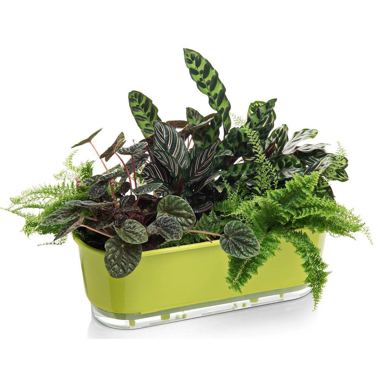 Jardineira Autoirrigável Verde Claro 40cm  - Vasos Raiz Loja Oficial