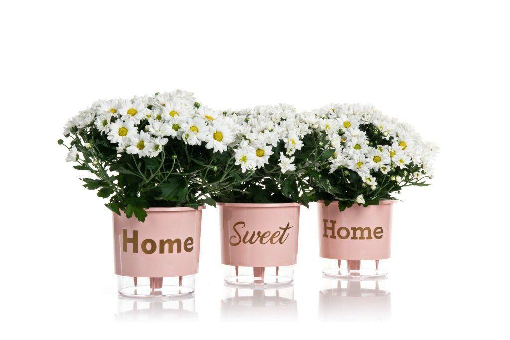 Kit 3 Vasos Autoirrigáveis Pequenos 12cm x 11cm Home Sweet Home Rosa Quartz