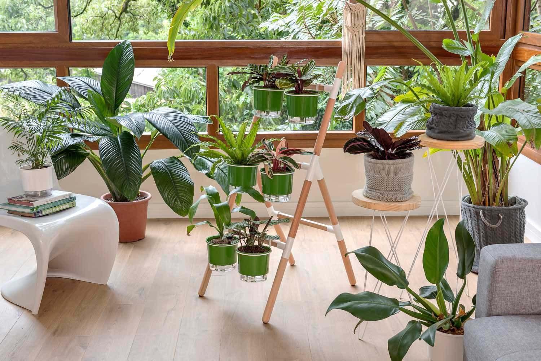 Kit Horta Vertical Escada Eleve Raiz 3 Níveis Branco e Verde  - Vasos Raiz Loja Oficial