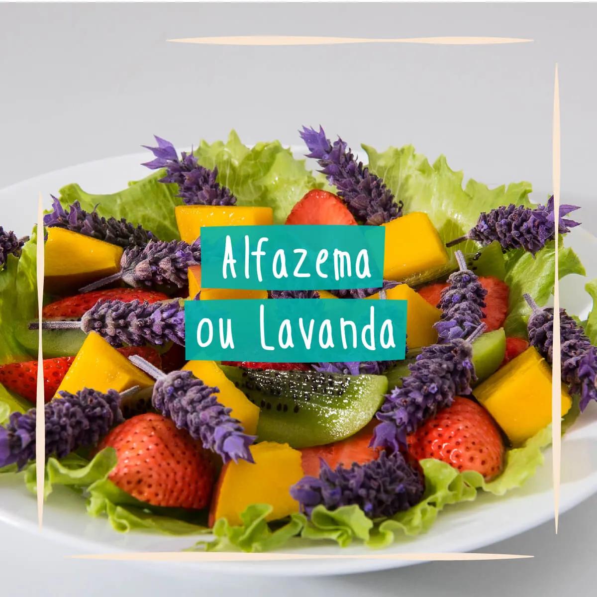 Sementes para plantar Alfazema ou Lavanda Comestível  - Vasos Raiz Loja Oficial