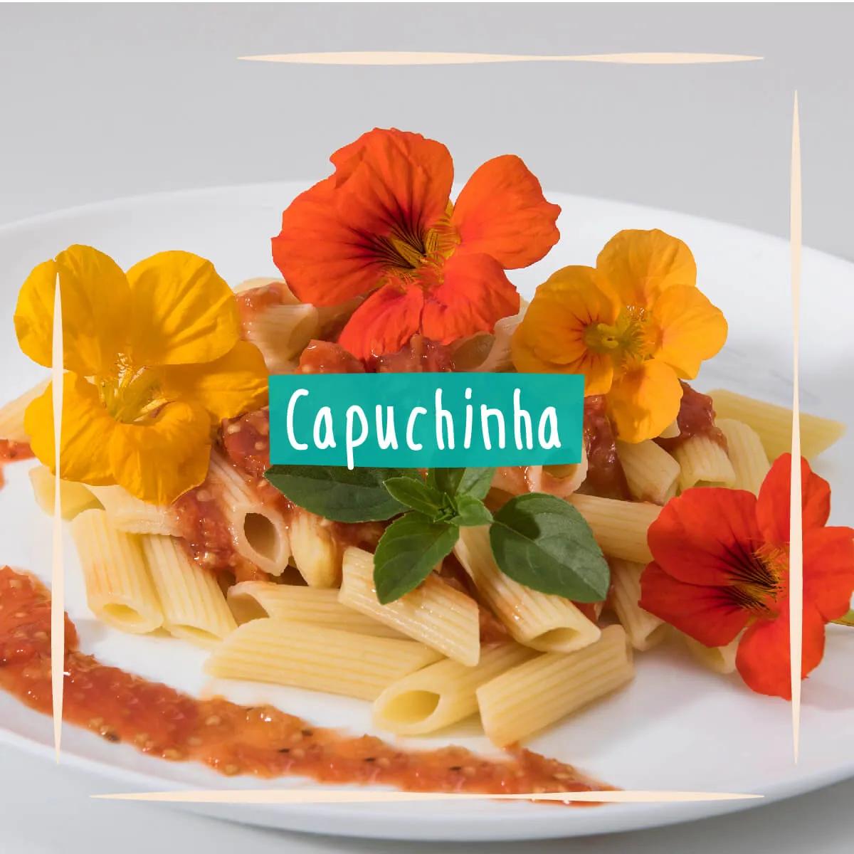 Sementes para plantar Capuchinha Comestível  - Vasos Raiz Loja Oficial