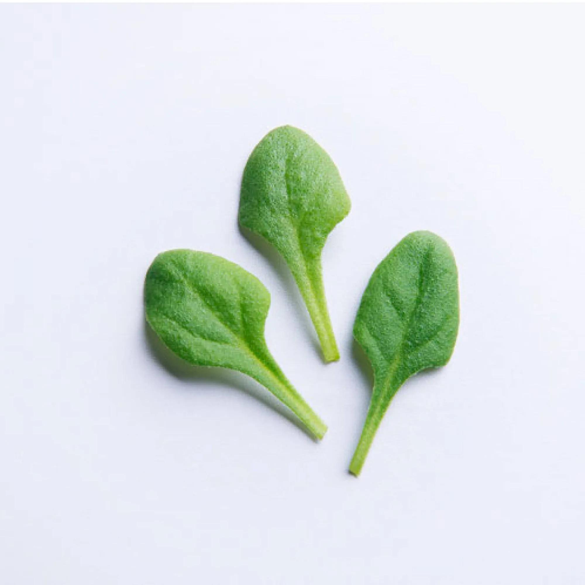 Sementes para plantar Espinafre Baby Leaf em vasos autoirrigáveis RAIZ  - Vasos Raiz Loja Oficial