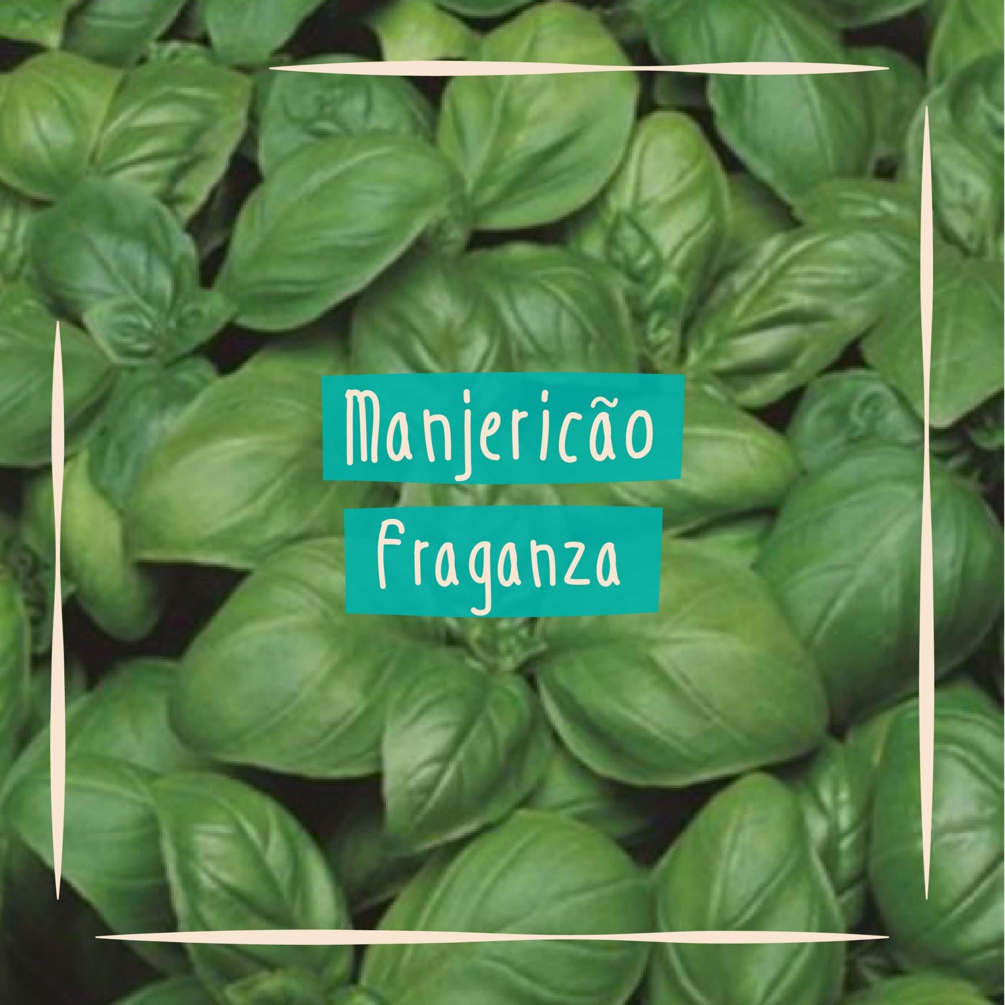 Sementes para plantar Manjericão Basílico Folha Larga em vasos autoirrigáveis RAIZ  - Loja Raiz