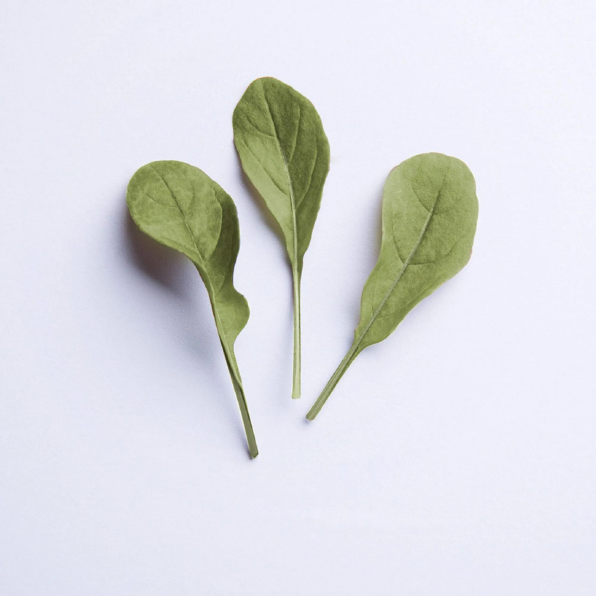 Sementes para plantar Rúcula Baby Leaf em vasos autoirrigáveis RAIZ  - Vasos Raiz Loja Oficial