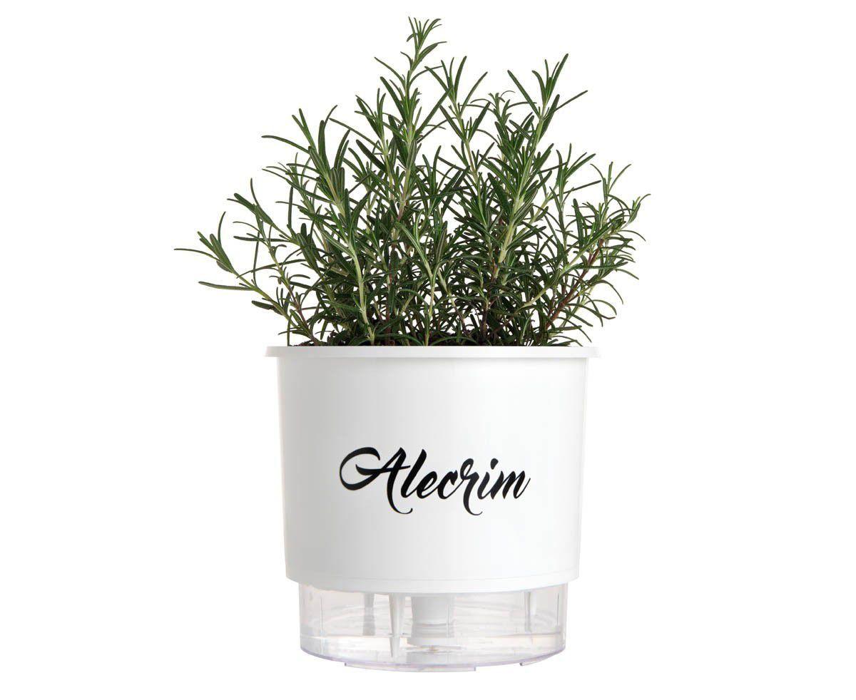 Vaso Autoirrigável Médio Branco Linha Gourmet 16cm x 14cm Alecrim