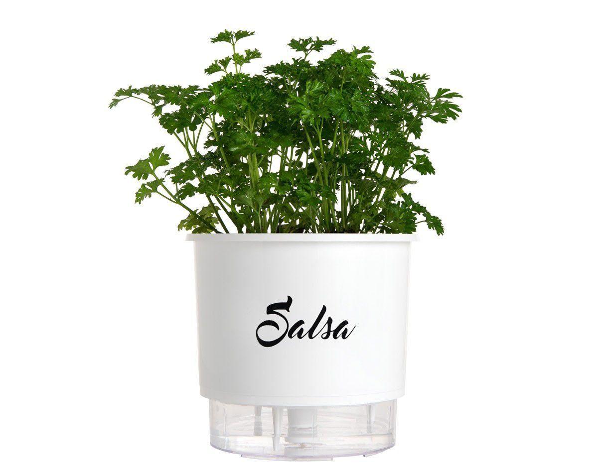 Vaso Autoirrigável Médio Branco Linha Gourmet 16cm x 14cm Salsa