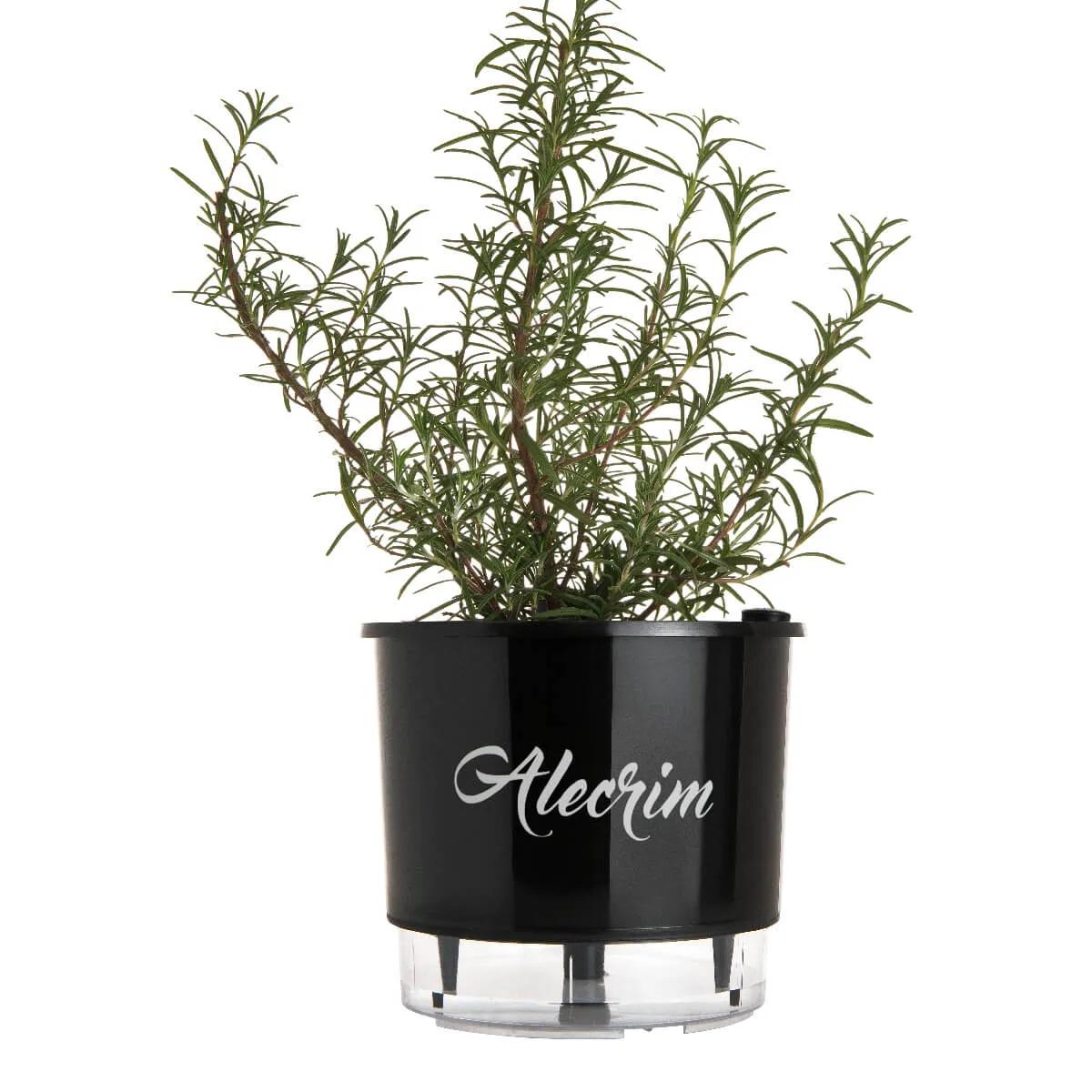 Vaso Autoirrigável Médio Preto Coleção Gourmet 16cm x 14cm Alecrim  - Vasos Raiz Loja Oficial