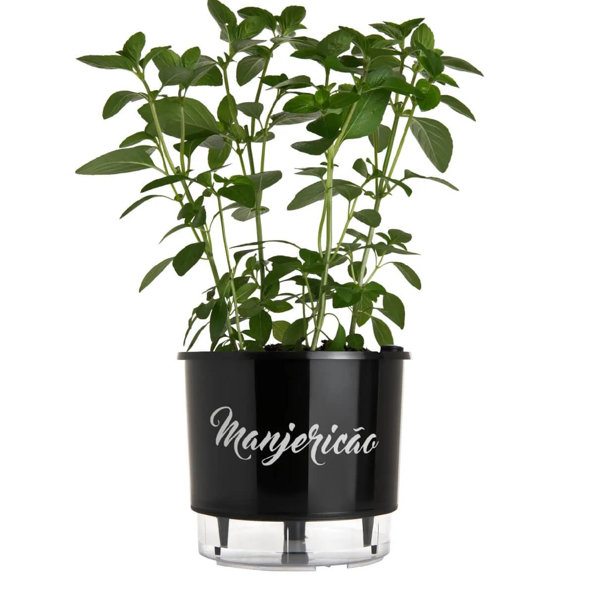 Vaso Autoirrigável Médio Preto Coleção Gourmet 16cm x 14cm Manjericão  - Vasos Raiz Loja Oficial