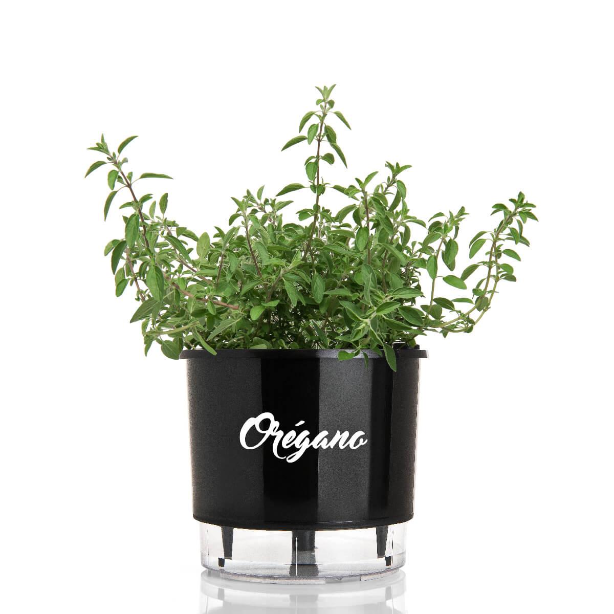 Vaso Autoirrigável Médio Preto Coleção Gourmet 16cm x 14cm Orégano  - Vasos Raiz Loja Oficial
