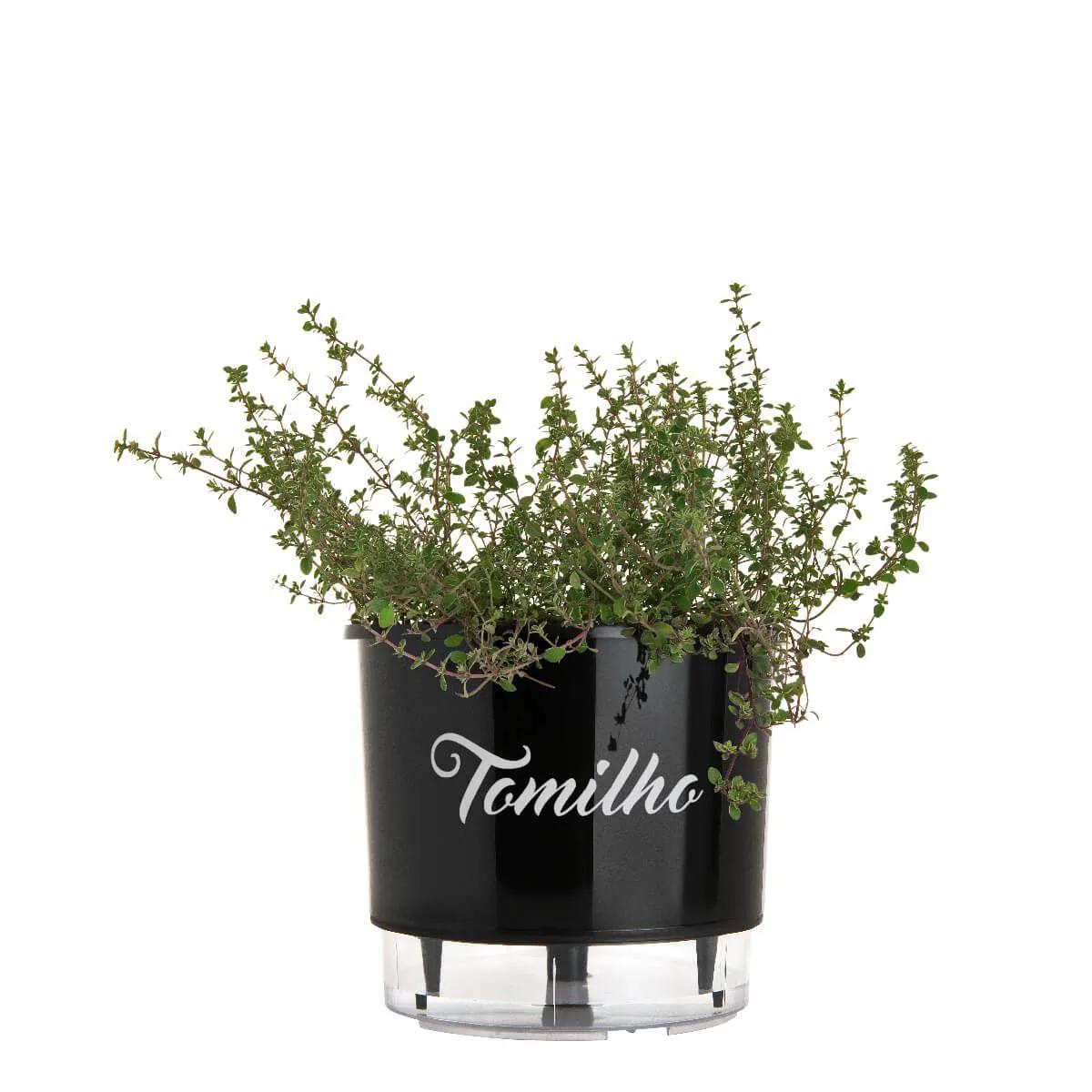 Vaso Autoirrigável Médio Preto Coleção Gourmet 16cm x 14cm Tomilho  - Vasos Raiz Loja Oficial