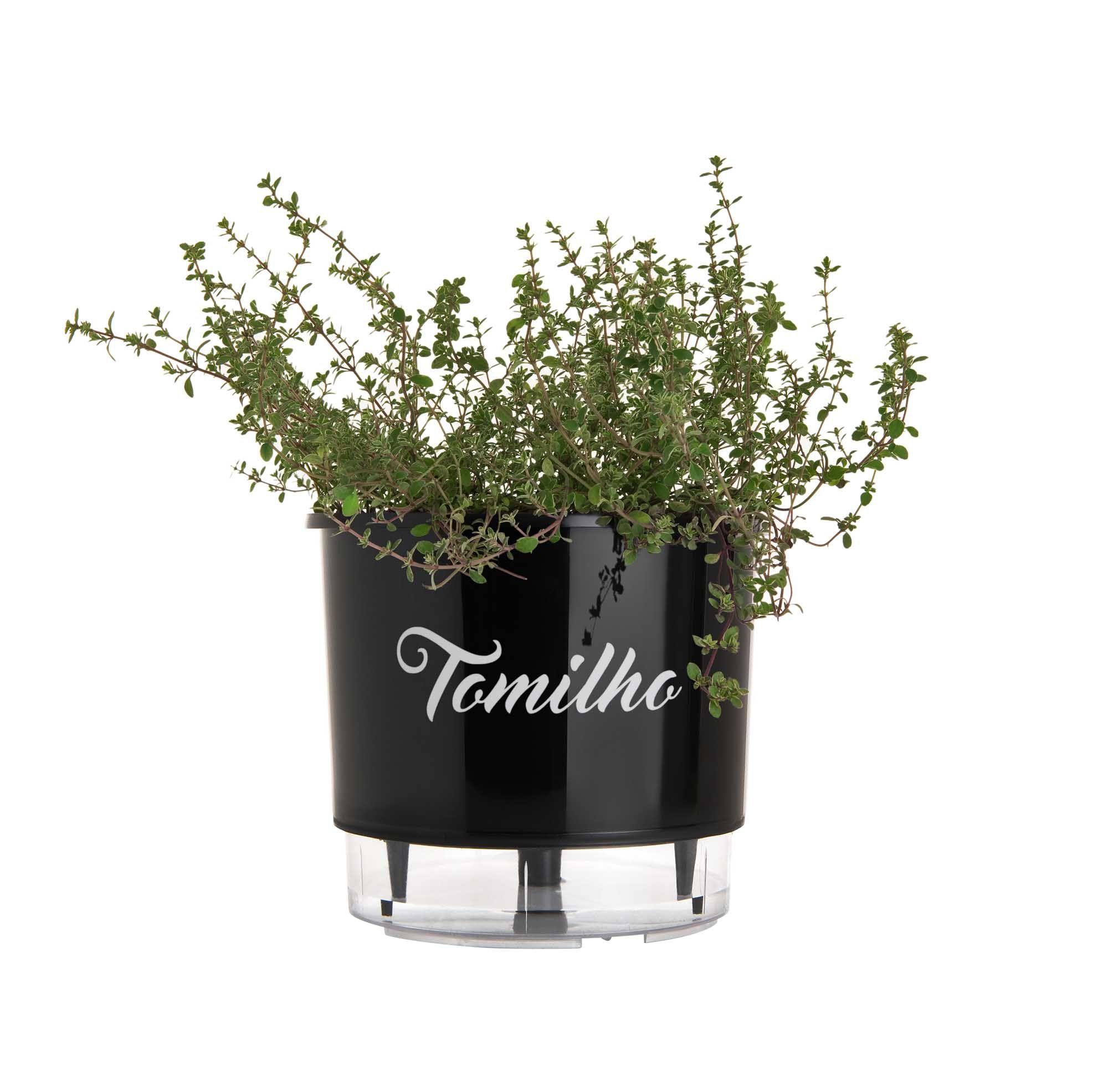 Vaso Autoirrigável Médio Preto Linha Gourmet 16cm x 14cm Tomilho