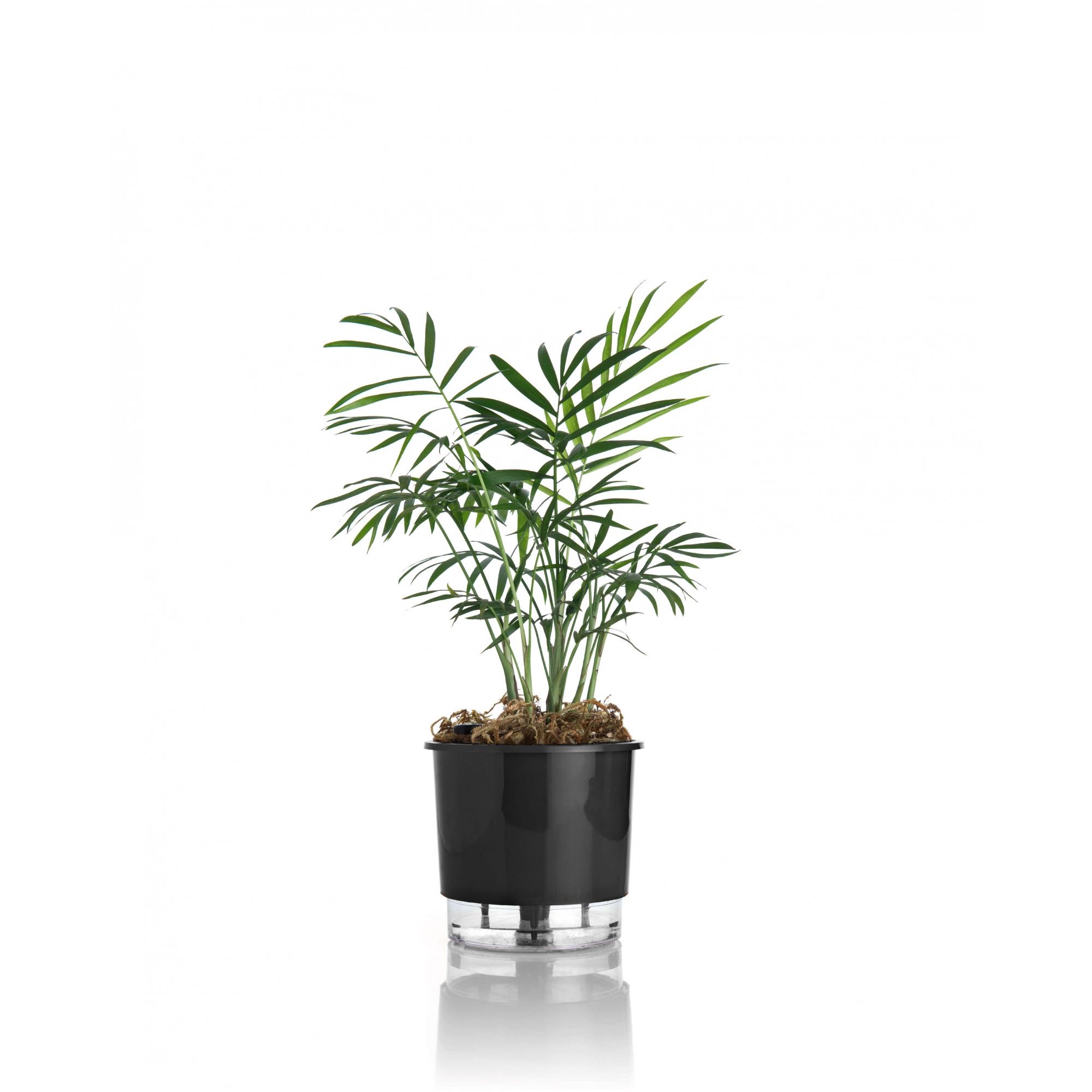 Vaso Autoirrigável Pequeno 12cm x 11cm N02  - Loja Raiz